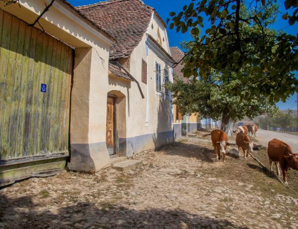 Plimbare de o zi pe cai in Viscri