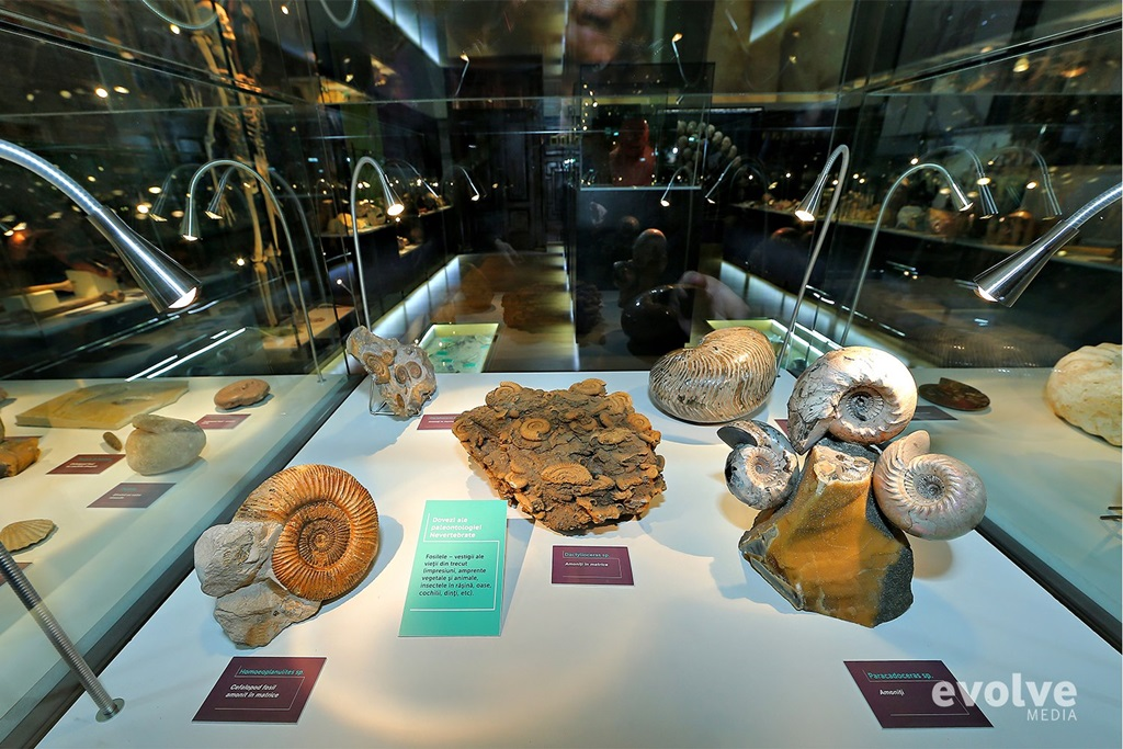 Vizitează Muzeul Omului - Muzeul Județean de Stiințele Naturii Prahova