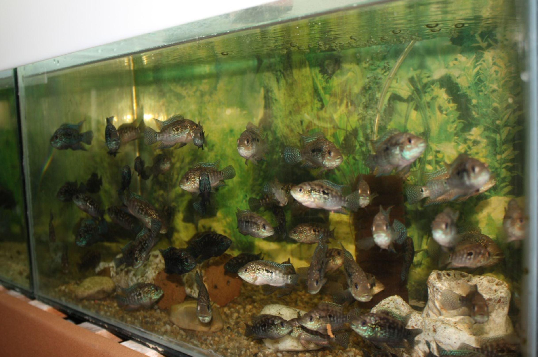 Vizitează Secția Acvariu a Muzeului Județean de Științele Naturii Prahova