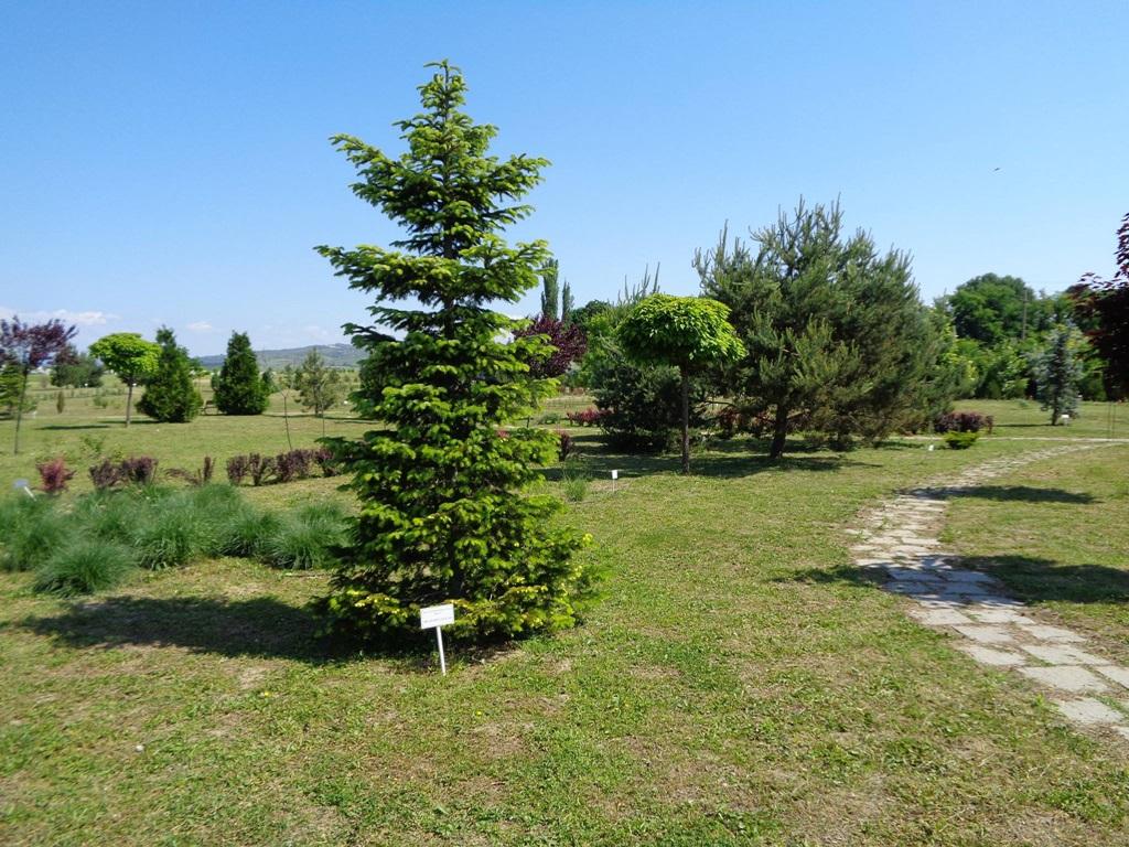 Vizitează Grădina Botanică Bucov