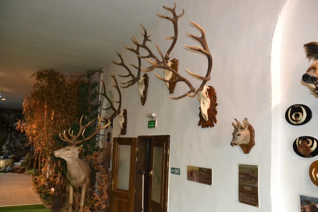 Vizitează Muzeul Natura Văii Teleajenului