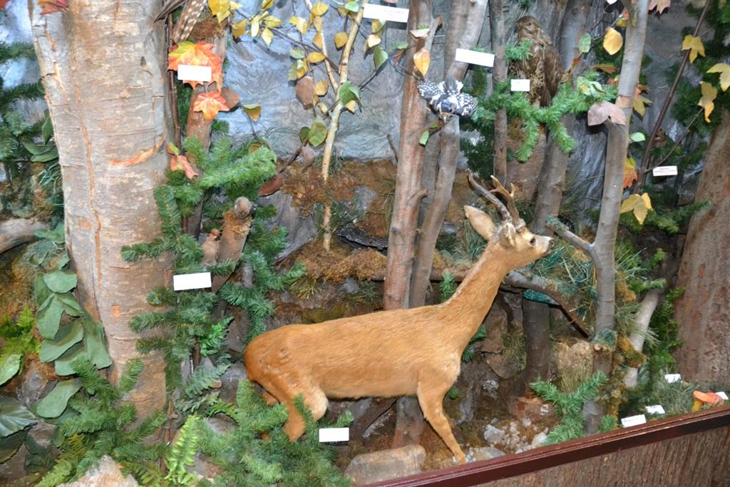 Vizitează Muzeul Rezervației Bucegi