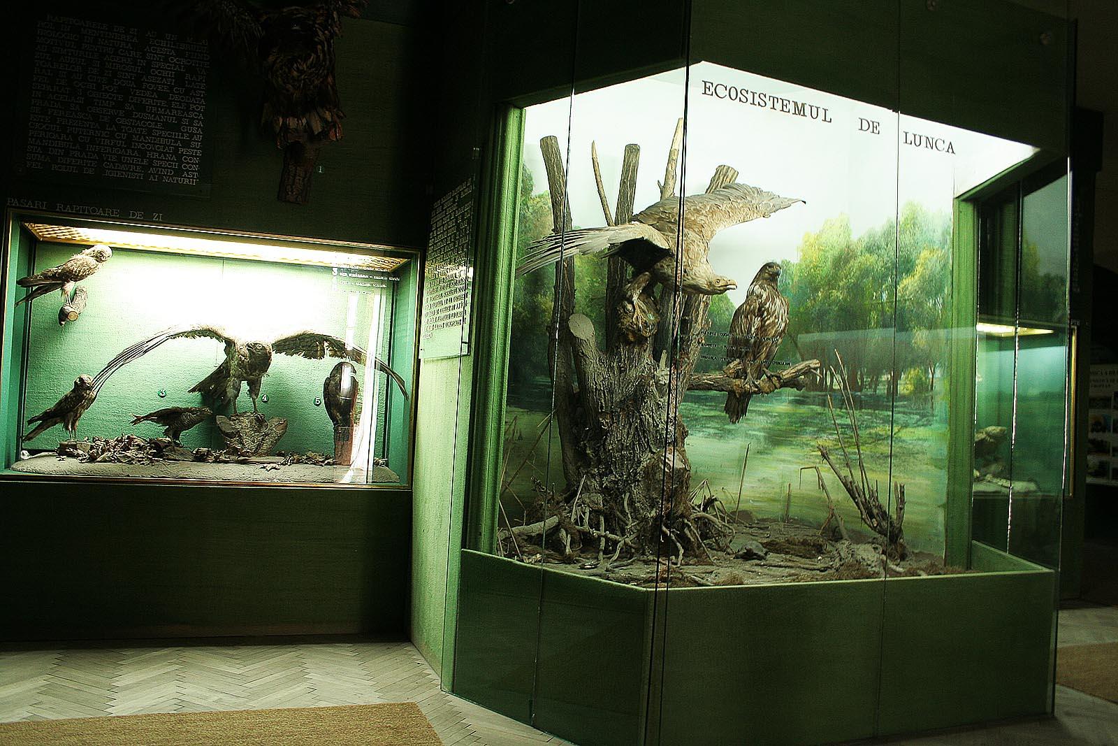 Sectia Stiintele Naturii a Muzeului Brailei