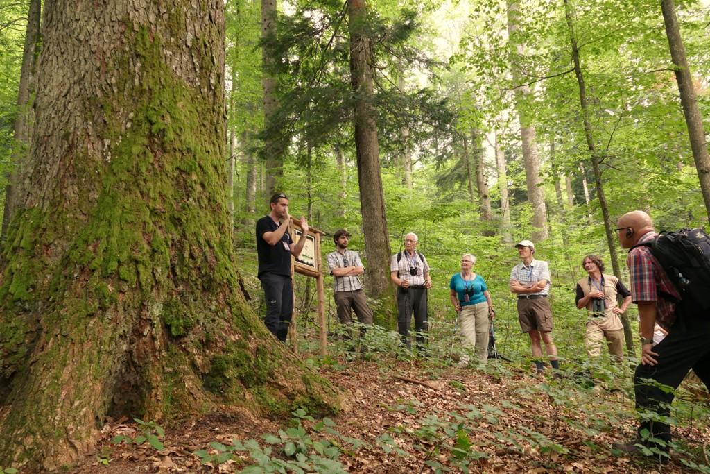 Povestea lemnului - Moștenire vie în Maramureș, patrimoniu UNESCO