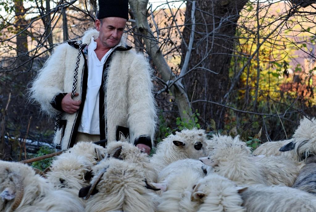 Povestea lânii - în identitatea Maramureșului