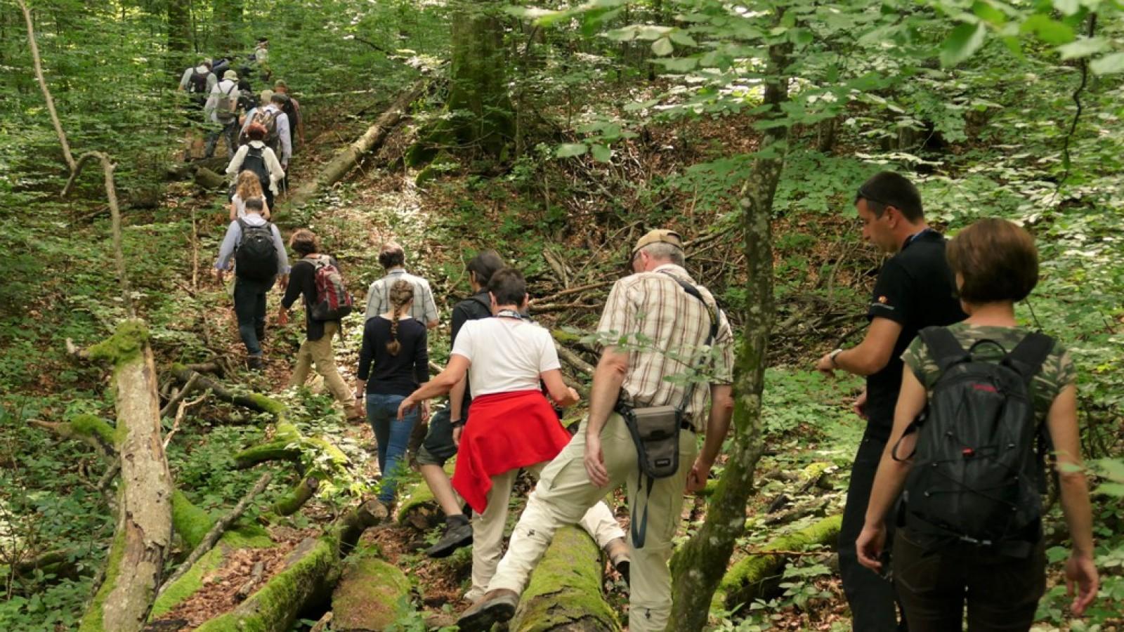 Drumeție și observare a viețiii sălbatice în pădurile virgine