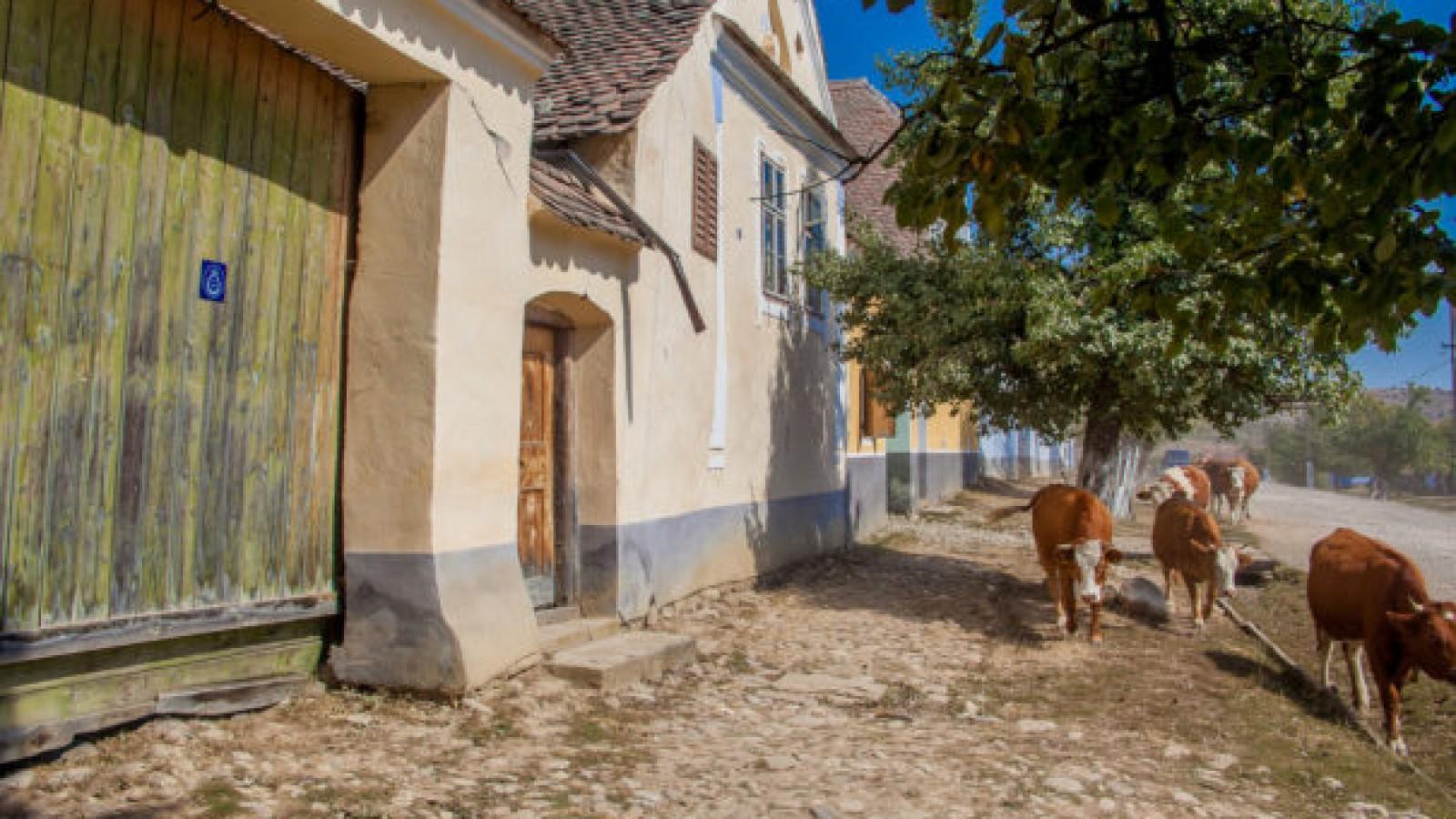 Plimbare pe cai in Viscri