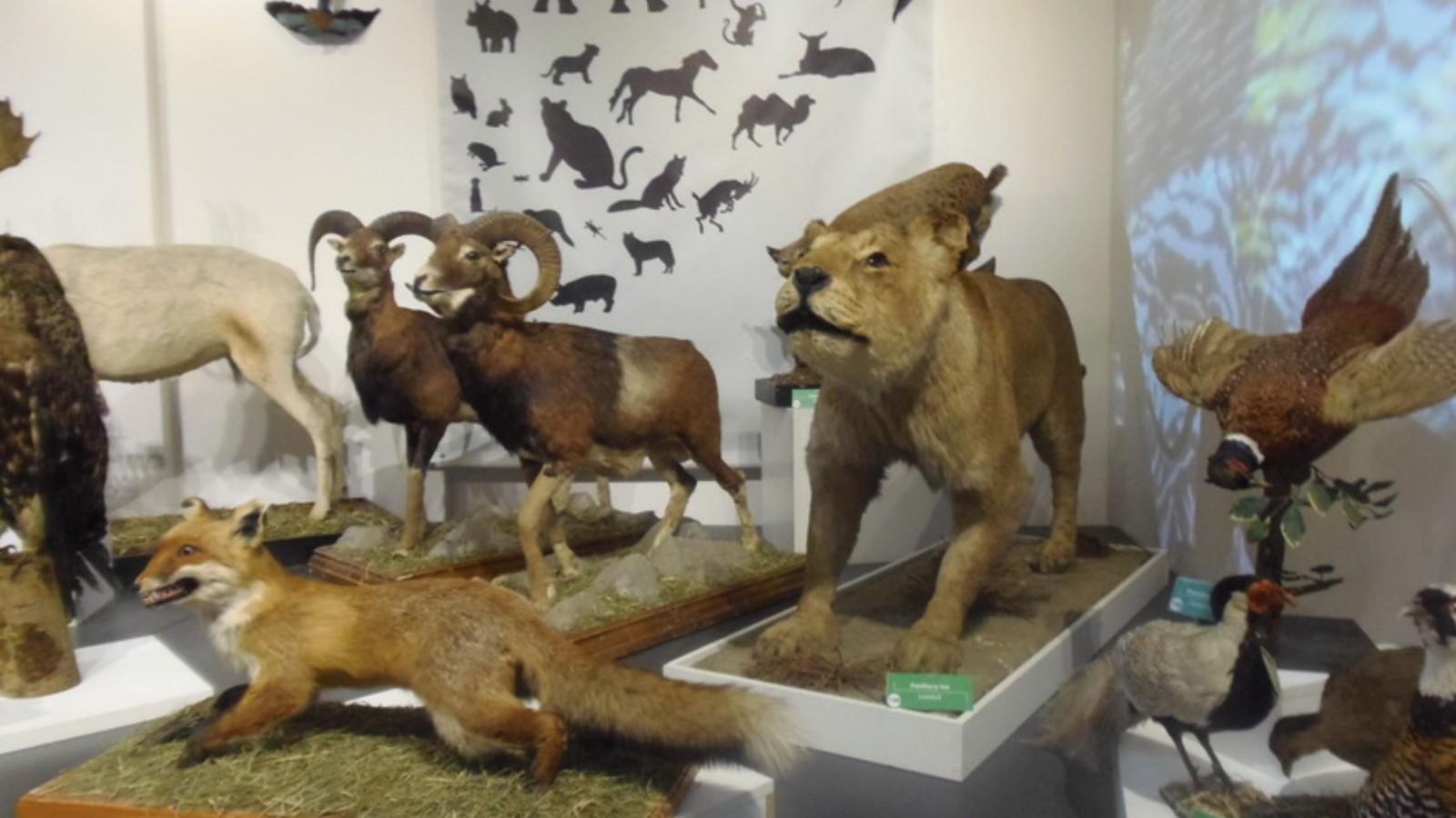 Muzeul Omului - Muzeul Judetean de Stiintele Naturii Prahova
