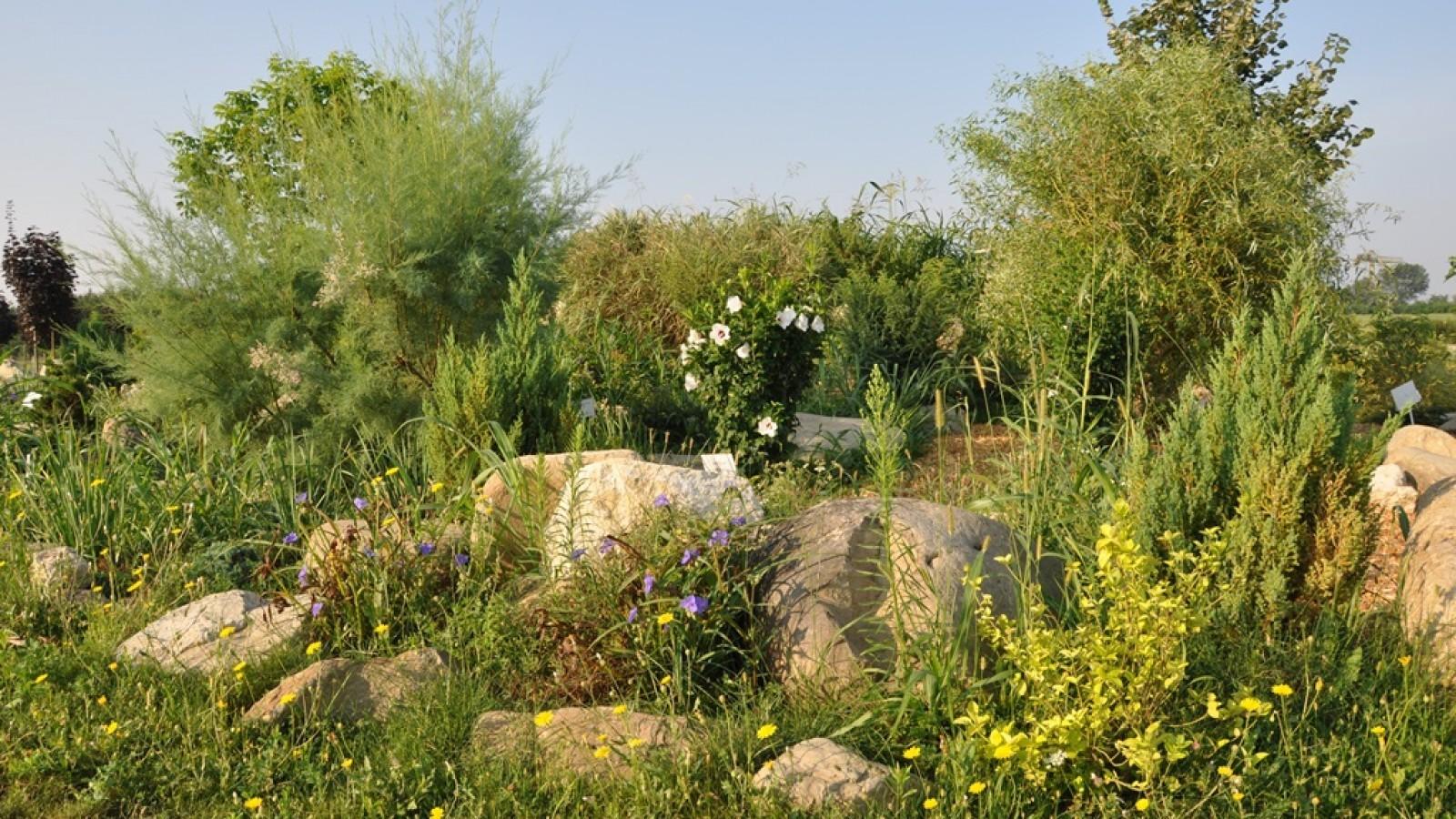 Gradina Botanica Bucov