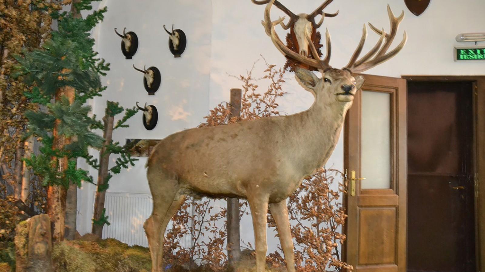 Muzeul Natura Vaii Teleajenului
