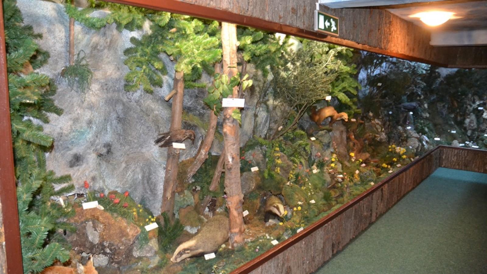 Muzeul Rezervatiei Bucegi
