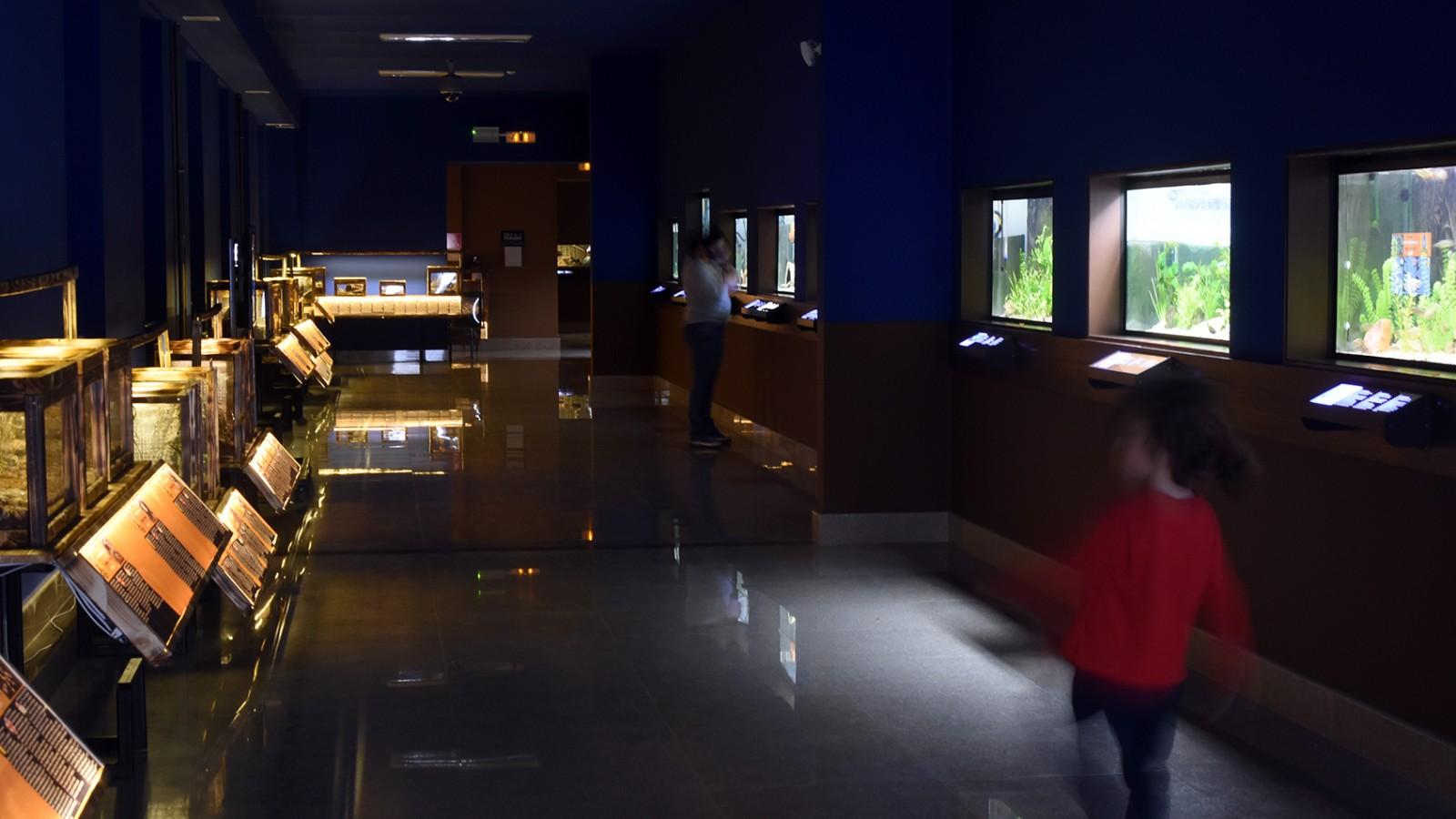 Vivariul Muzeului Țării Crișurilor
